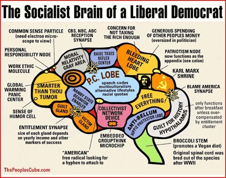 liberal_brain1