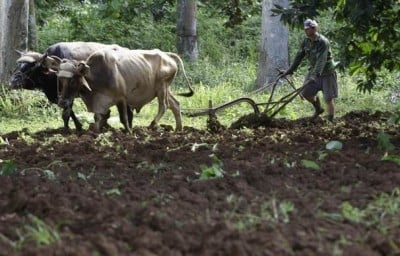 Cuban serf tilling the soil for his feudal lords
