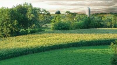 cornfields010