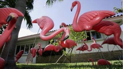 t1larg.flamingos