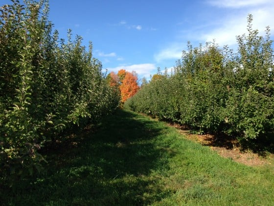 Bishop's orchard, Northford, Connecticut