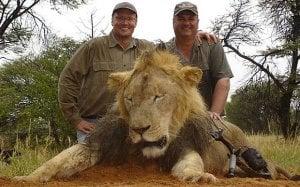lionpalmer