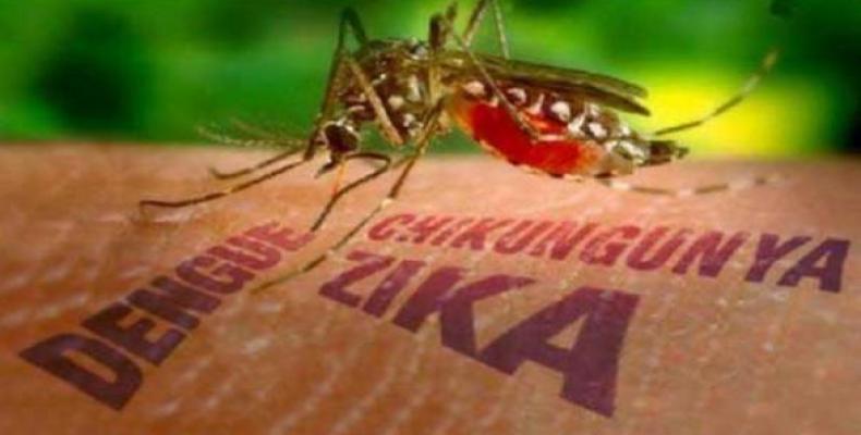 zika cuba mosquito