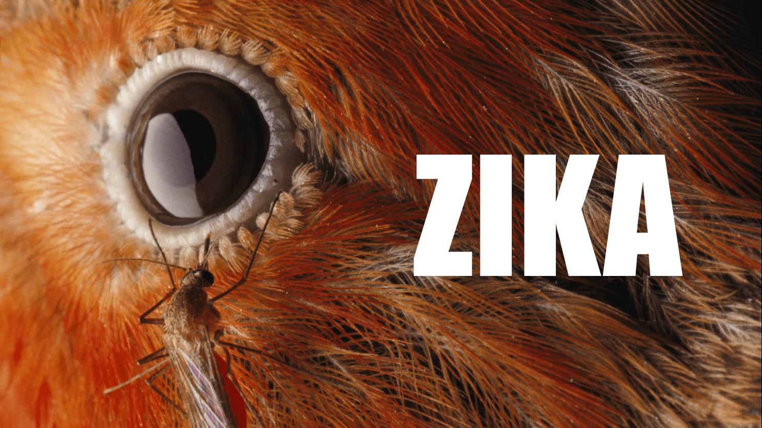 ZIKA BIRDS