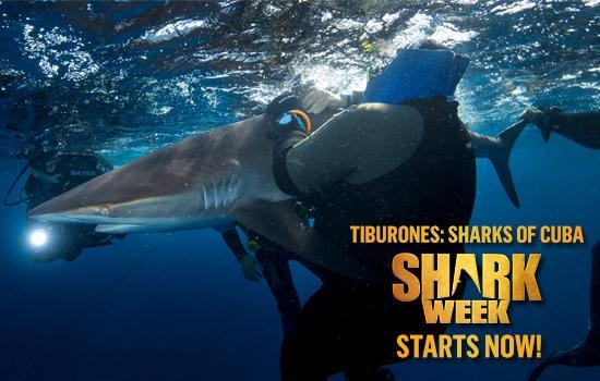 sharkattacks5