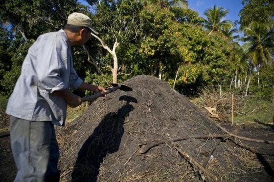 Cuban slave shovels Marabu ashes