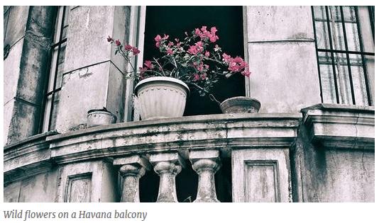 wild flowers havana balcony