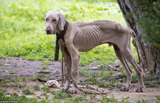 Venezuelan dog